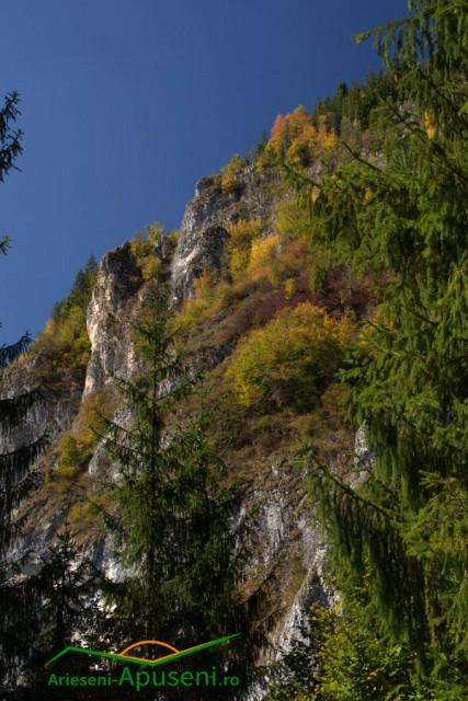 Cheile Arieșului numite și Cheile Albacului situate la limita dintre comunele Scărișoara și Albac