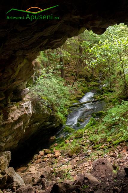 Vedere din peșteră spre izbuc și pârâul ce curge spre Valea Arieșului Mic.