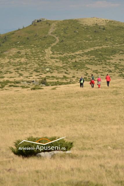 Vârful Curcubăta Mică - atracție turistică din Apuseni. Priveliște încântătoarea spre Valea Arieșului Mare și Valea Arieșului Mic.